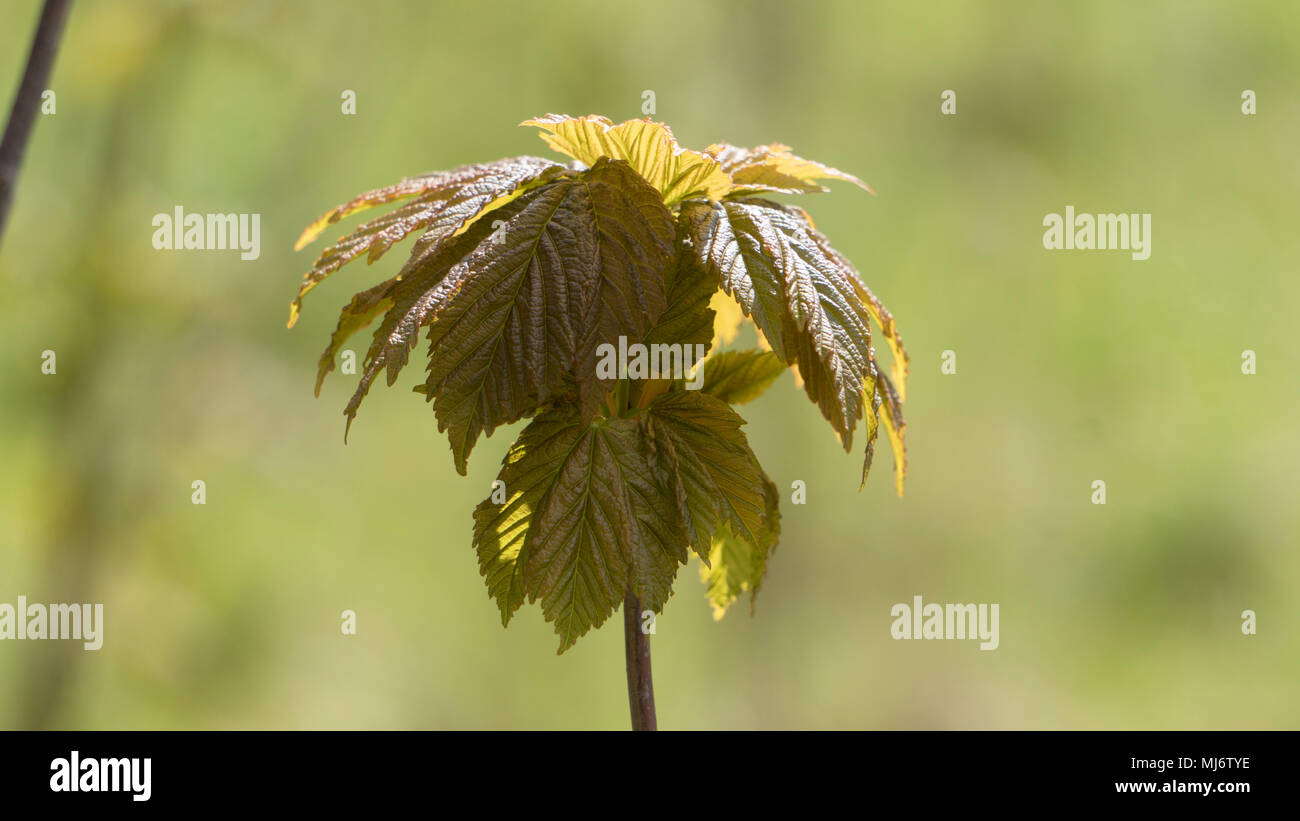 Plants - Stock Image