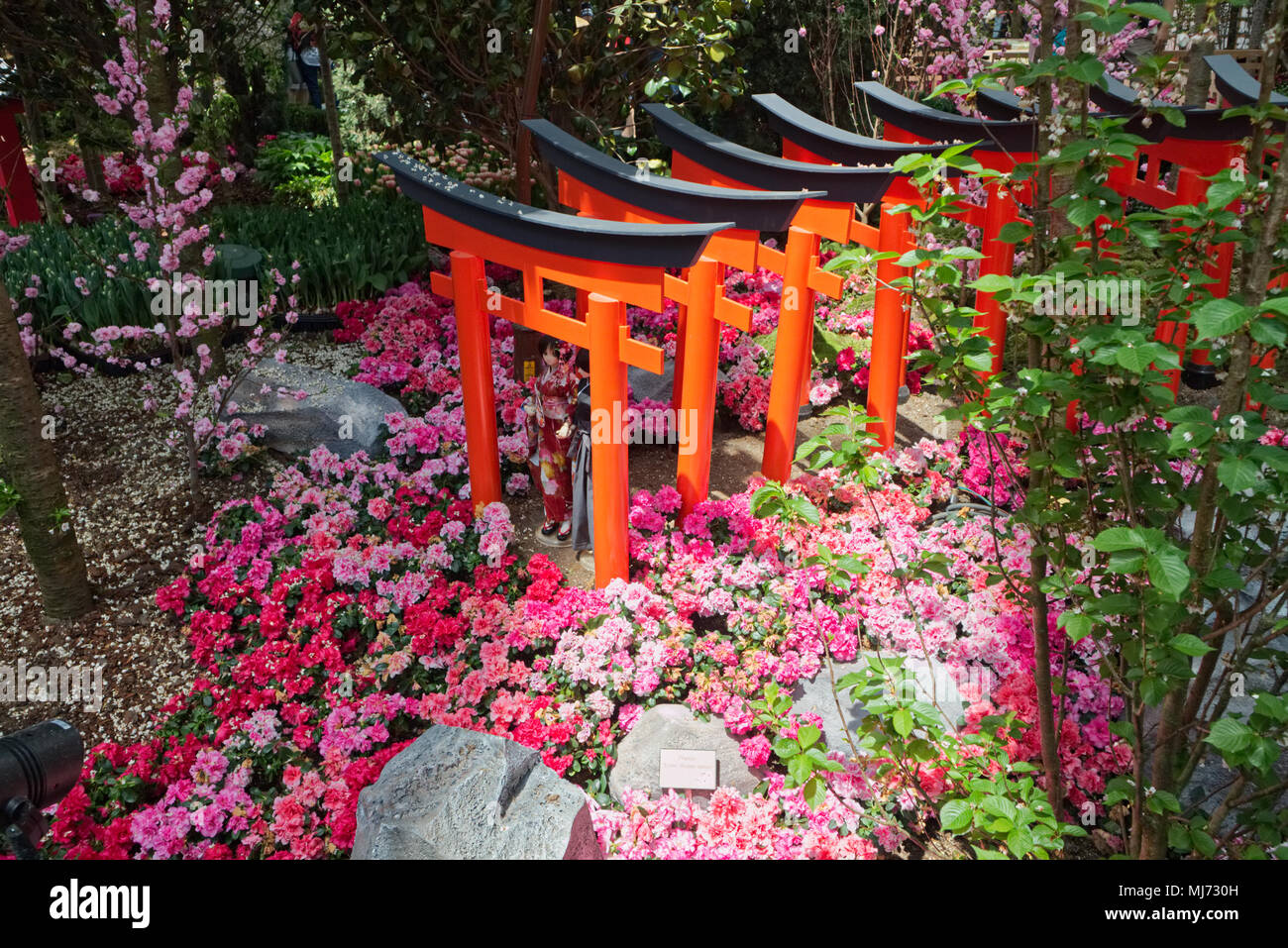 Singapore / Singapore - April 9 2018: Japanese figurines are laid out in the Flower Dome in the Gardens by the Bay of Singapore as part of a Sakura (c - Stock Image
