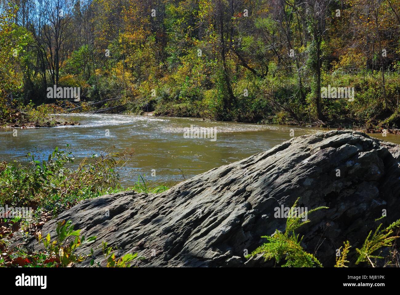 Blue Rockfish Stock Photos Amp Blue Rockfish Stock Images