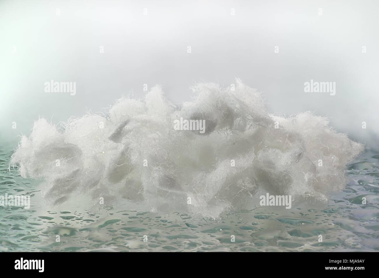Cellulose fiber - Stock Image