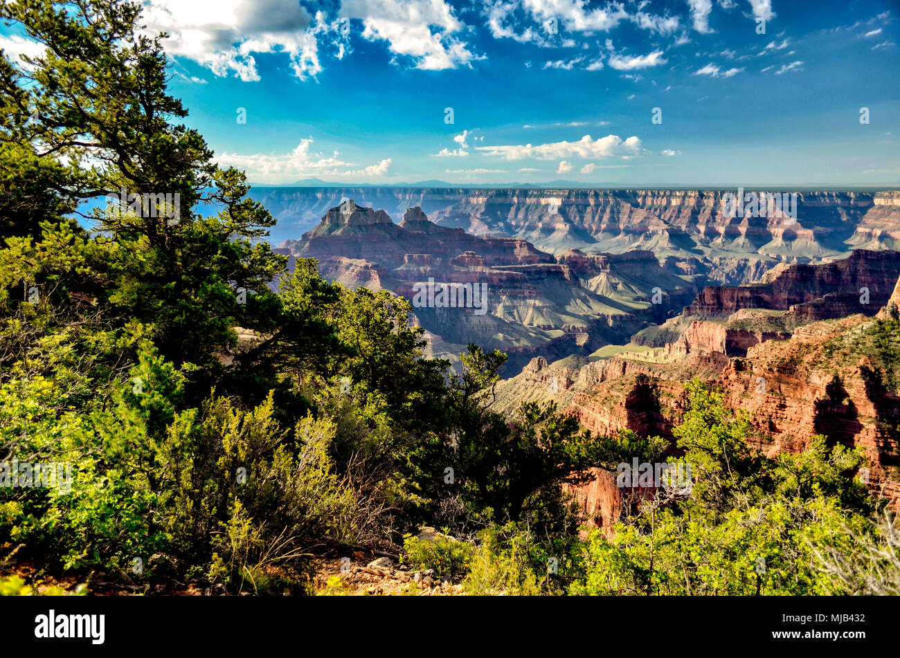 Looking from the North Rim of the Grand Canyon to the South side, green trees, deep canyons under a blue sky with white fluffy clouds. - Stock Image