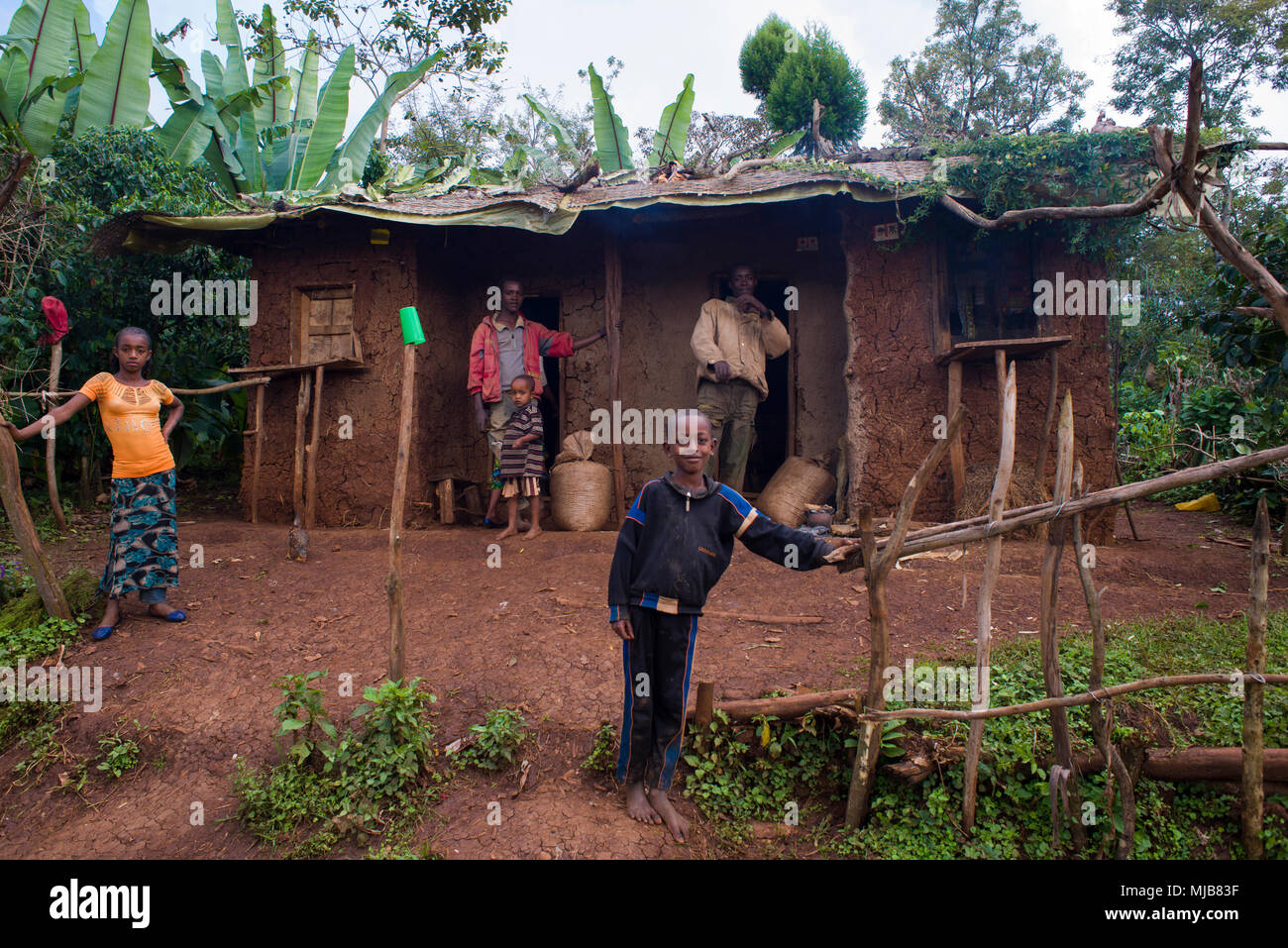 Two families  of coffee farmers, and their house, at coffee forest near Yirgacheffe,Ethiopia - Stock Image