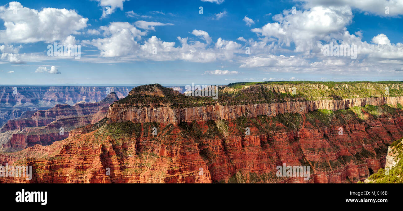 Panoramic view of the Grand Canyon with steep colorful canyon walls under a blue sky with white fluffy clouds. - Stock Image