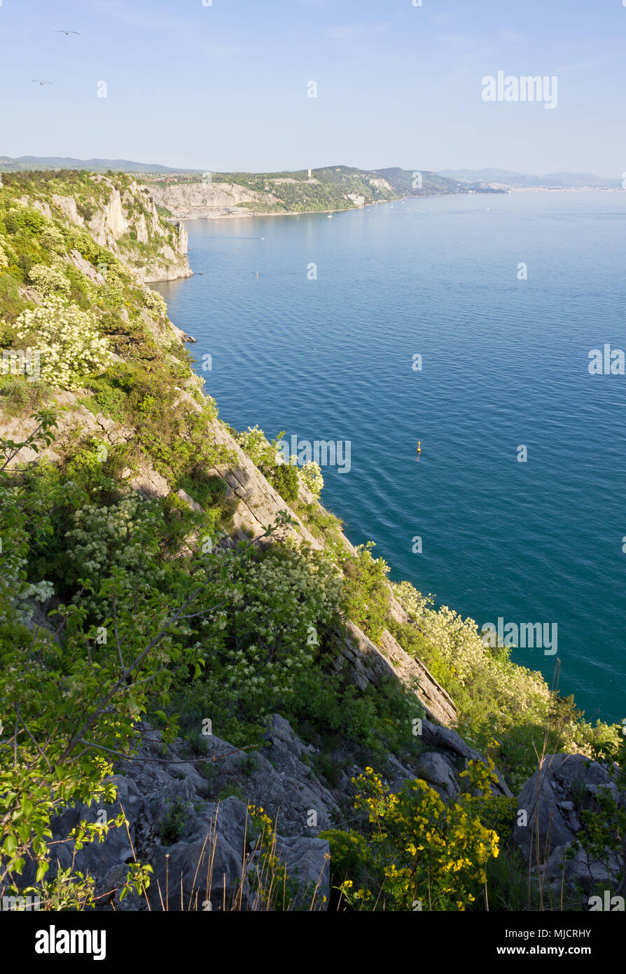Northern adriatic rocky coast between Duino and Sistiana, near Trieste, Italy, in springtime - Stock Image