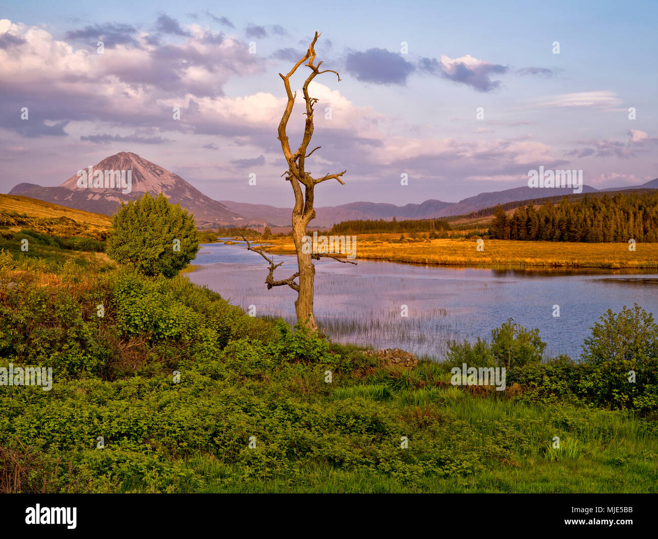 Ireland, Donegal, Glenveagh national park, view to the Mount Errigal at the Lough Nacung, evening sun - Stock Image