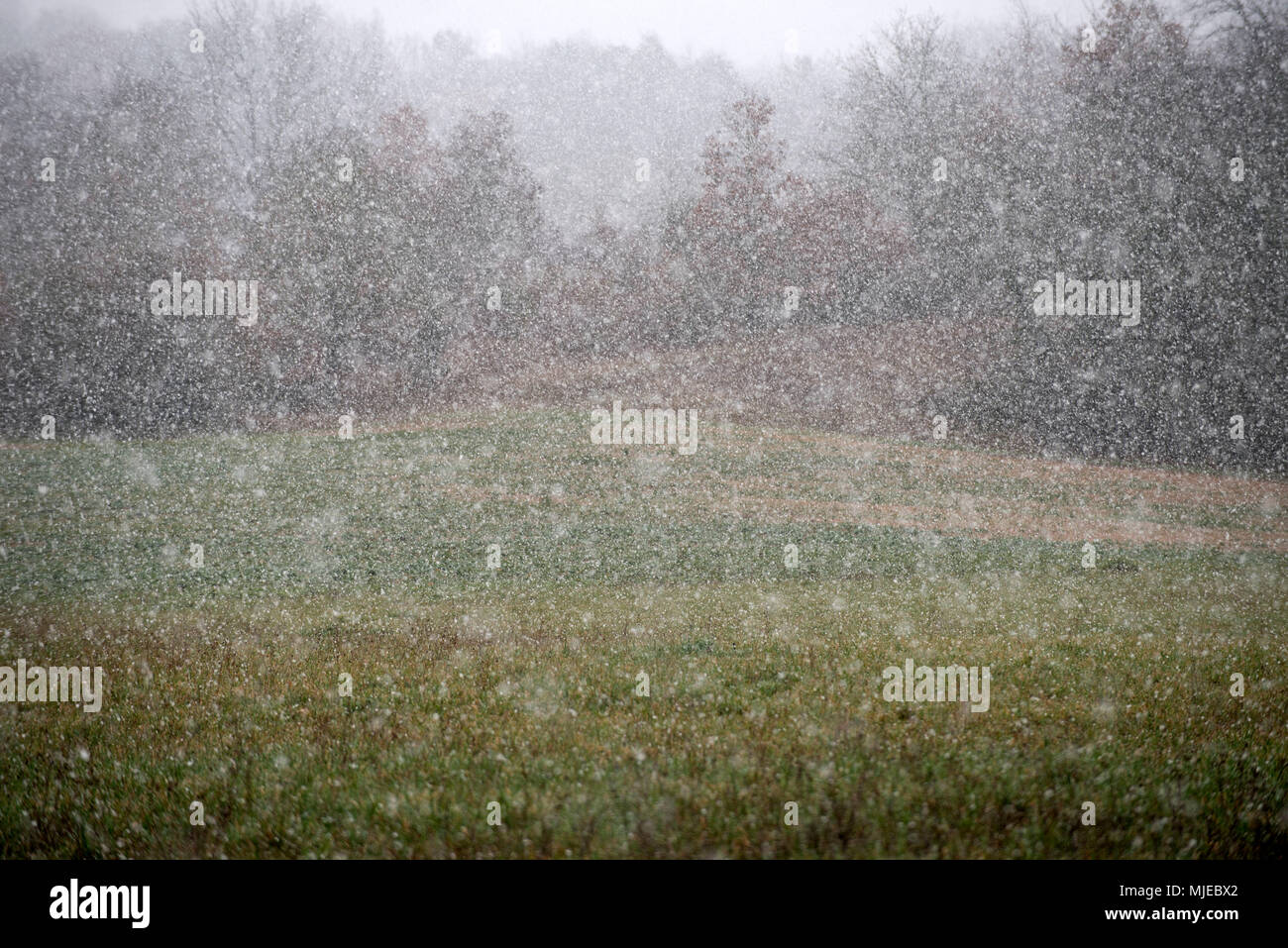 Lanscape, snowing - Stock Image