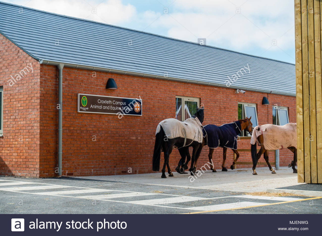 Myerscough College, the new multi million pound Croxteth Campus College Education hub, for Animal and Equine Studies, based at Croxteth Country Park, Merseyside, opens the new building for a student taster day, in order that school leavers can have a look at the new facilities, as staff return several horses to the stables. Croxteth Park, Liverpool England UK Stock Photo