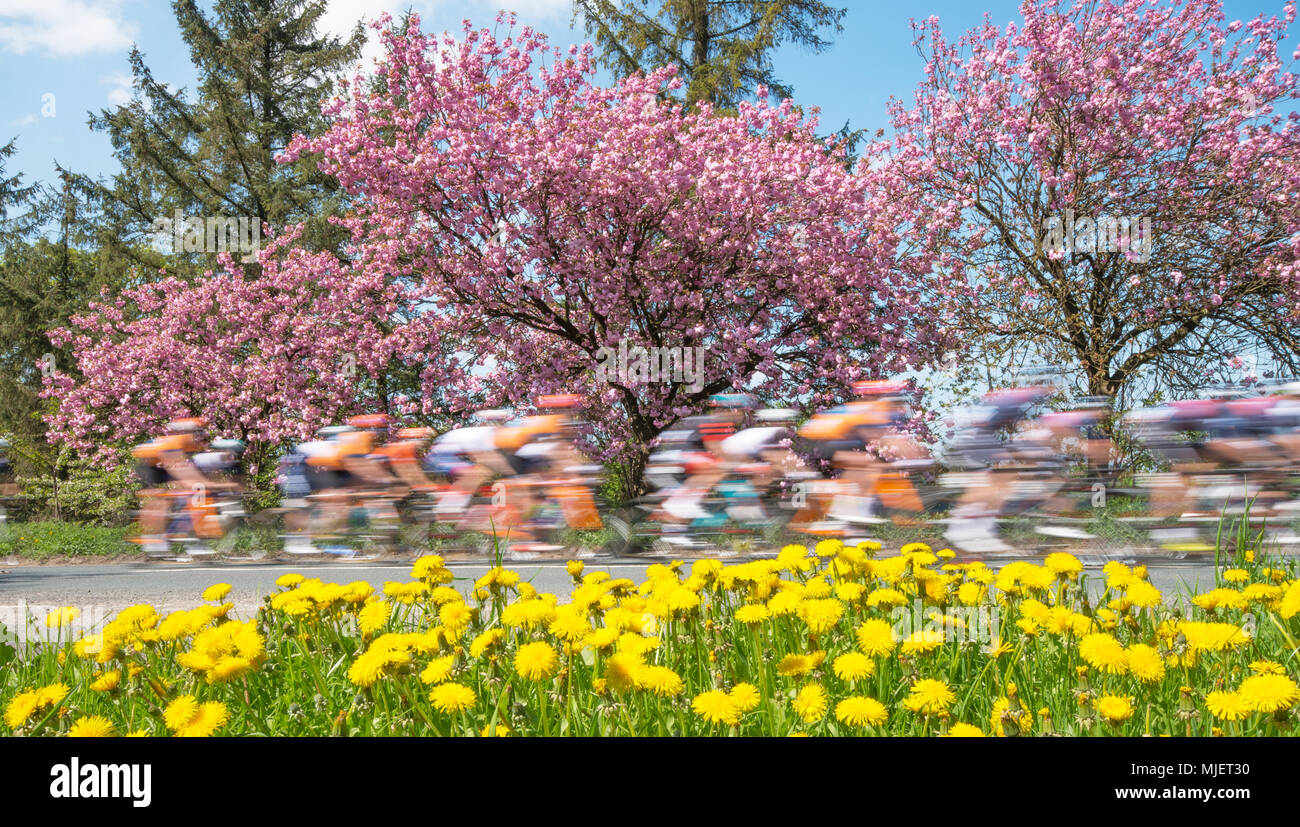 Ainderby Steeple, North Yorkshire, UK. 5th May 2018. The Tour de Yorkshire peloton passes through the North Yorkshire countryside on the third day of racing. Tomorrows race is the final leg over 190Km between Halifax and Leeds. Credit Robert Smith/ Alamy Stock Photo