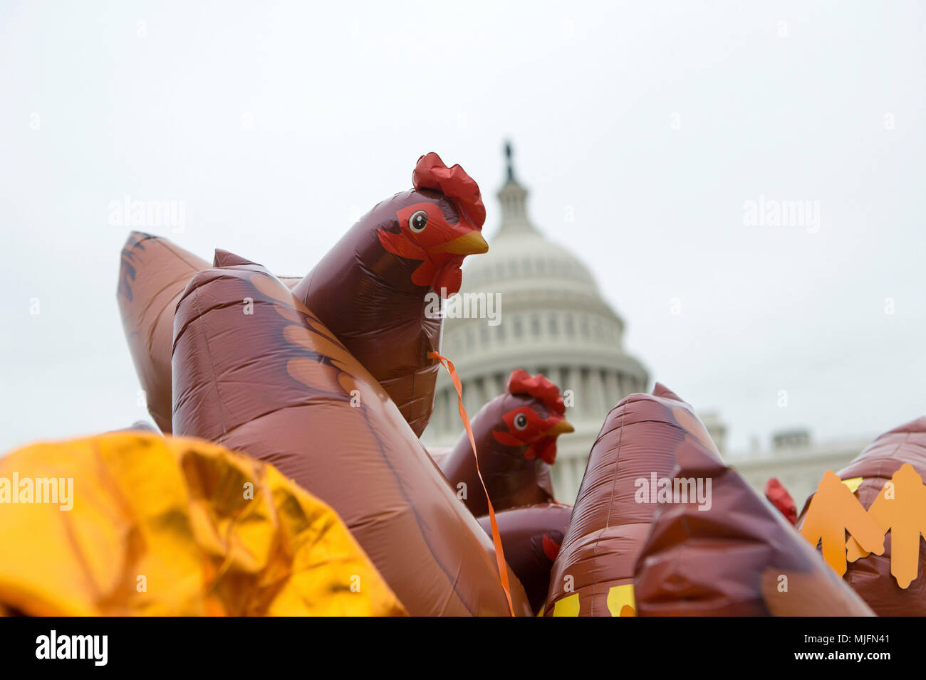 Image of: Statue Inflatable Chickens Wait For Distribution In Front Of The Us Capitol Prior To The Tax March Alamy Inflatable Trump Chicken Stock Photos Inflatable Trump Chicken