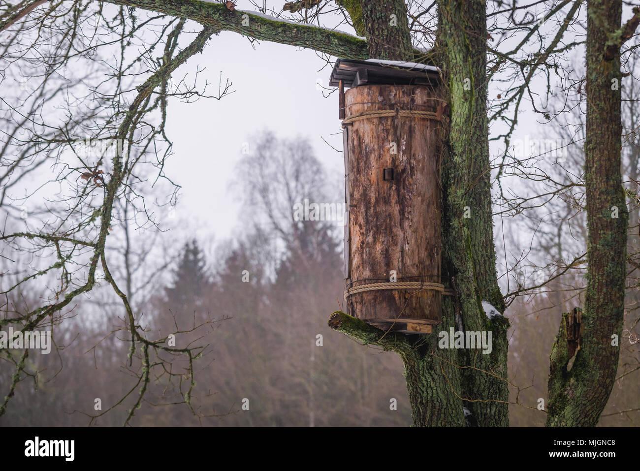 Traditional tree beehive called barc in Gruszki village within Hajnowka County, Podlaskie Voivodeship of Poland - Stock Image