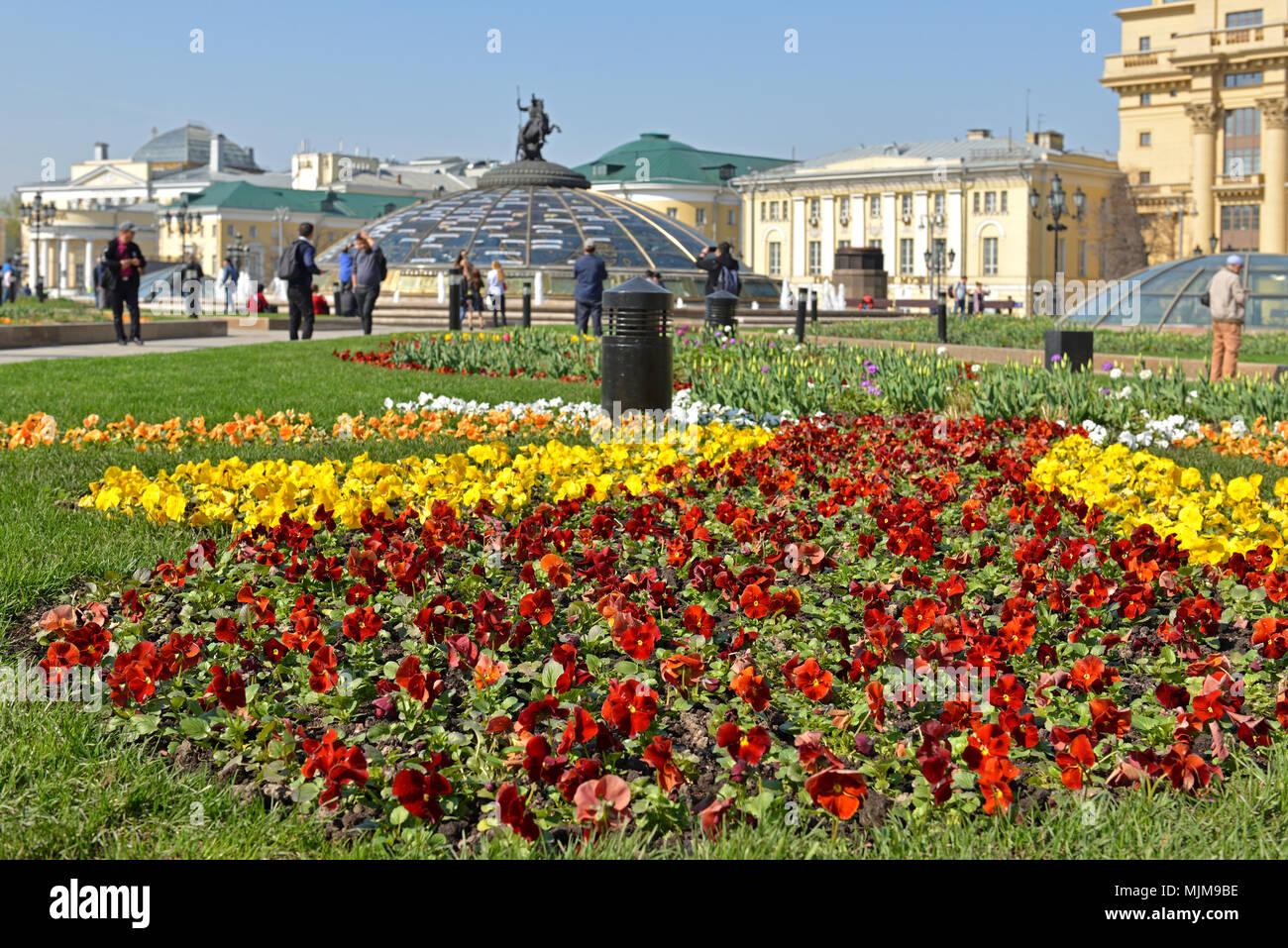 Flowers Pansies on Manege square - Stock Image