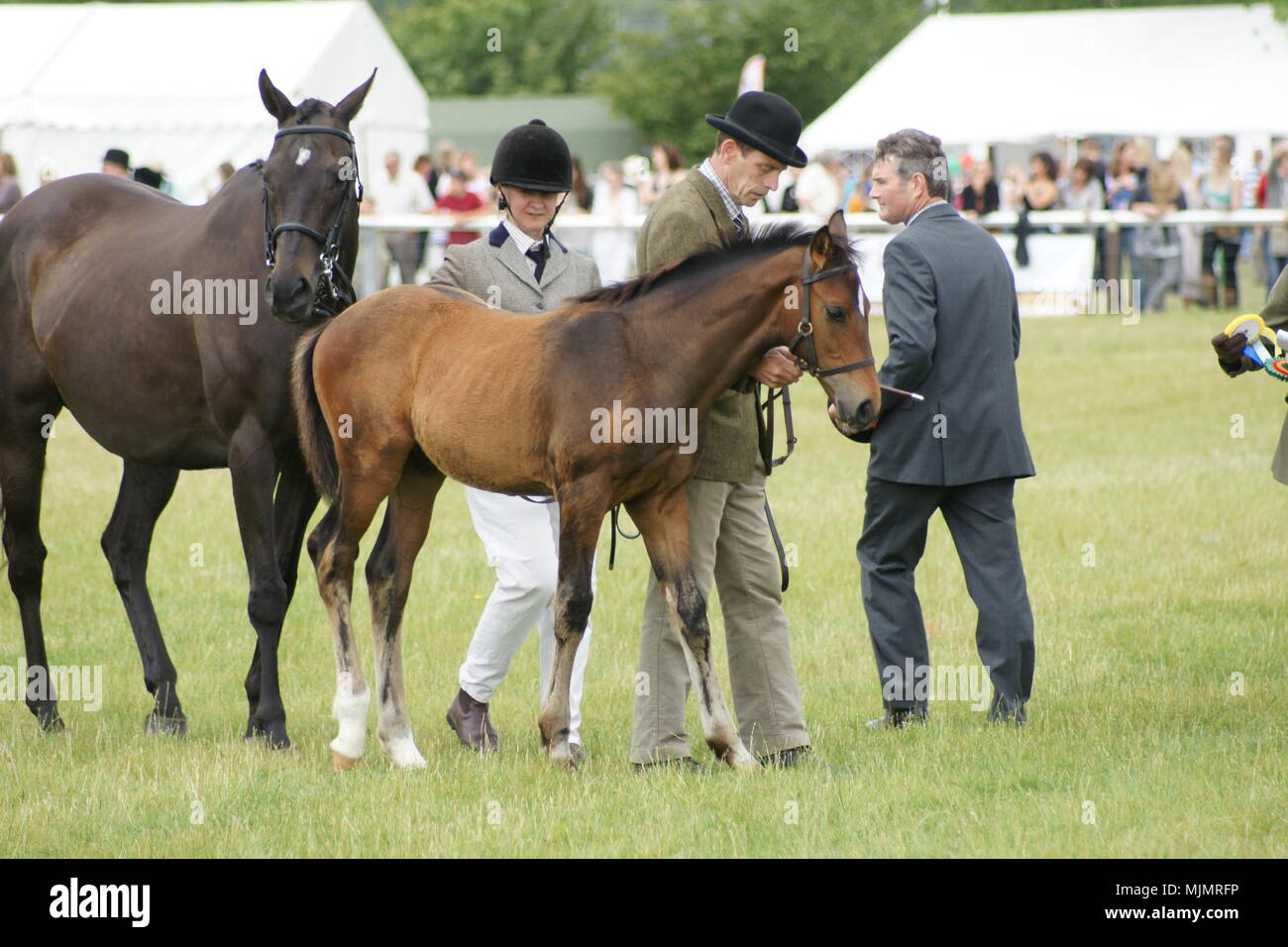 Driffield show, The Showground, country fair,  Driffield, UK - Stock Image