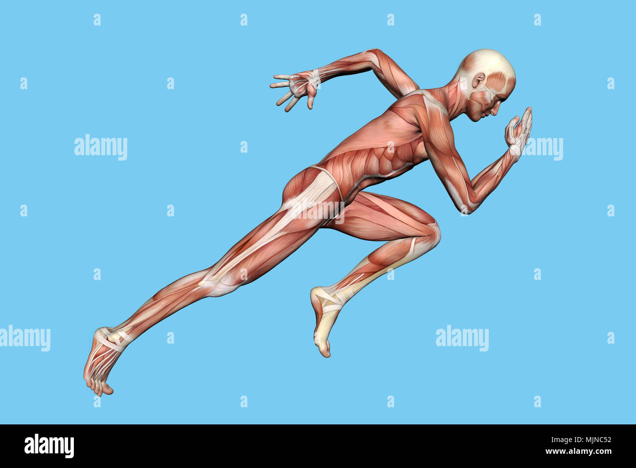 Muscles of Male Anatomy in Motion Stock Photo: 183638030 - Alamy