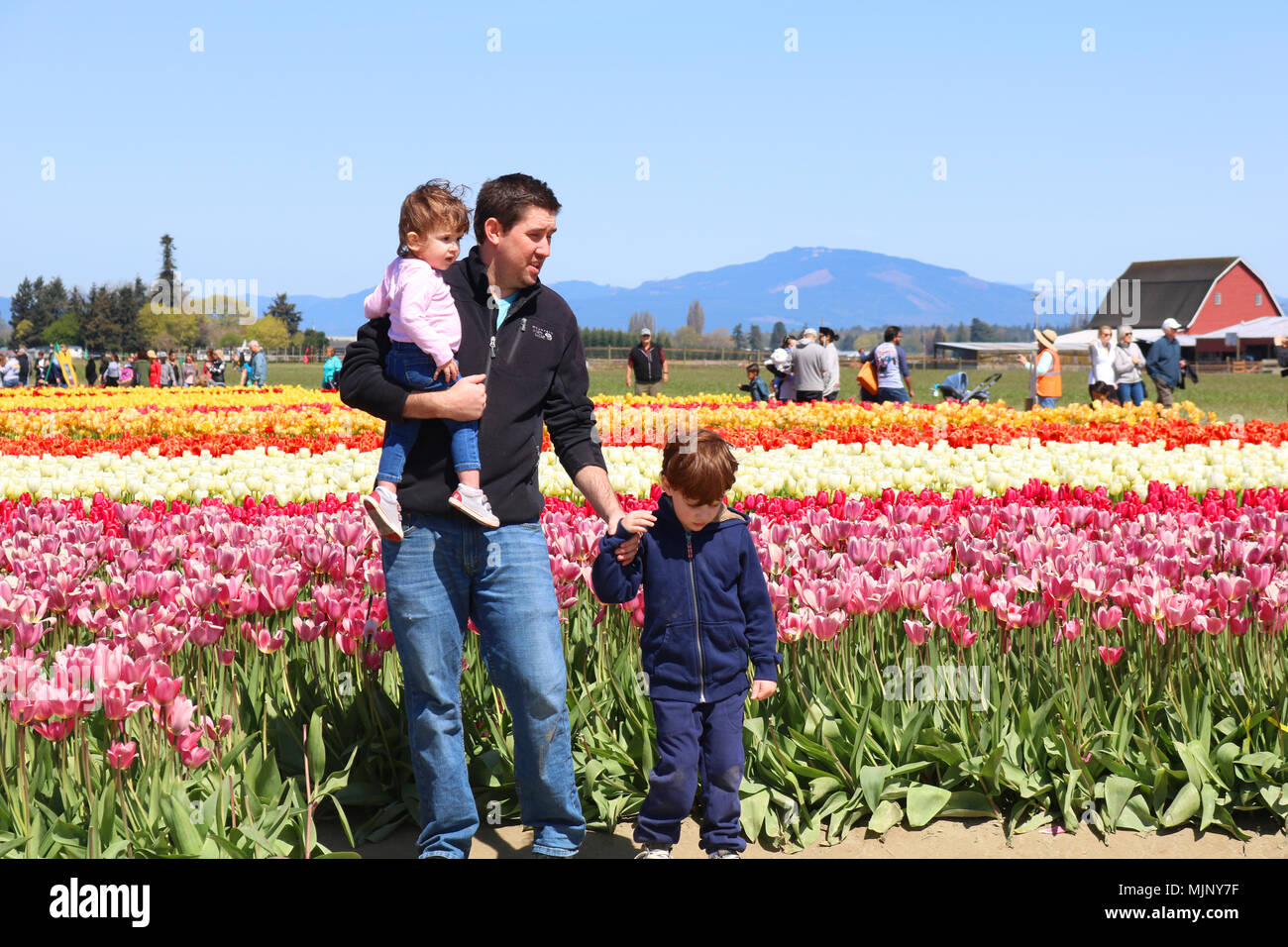 A father with his two children posing for pictures at the Skagit Valley Tulip Festival in Mount Vernon, Washington, USA.  The tulip fields are at Tuli - Stock Image