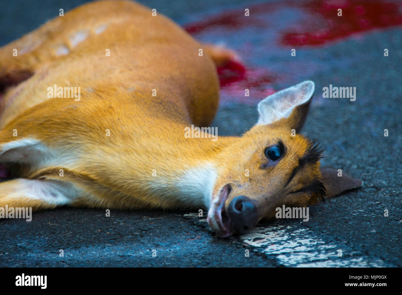 Animal Vehicle Collision Stock Photos & Animal Vehicle Collision