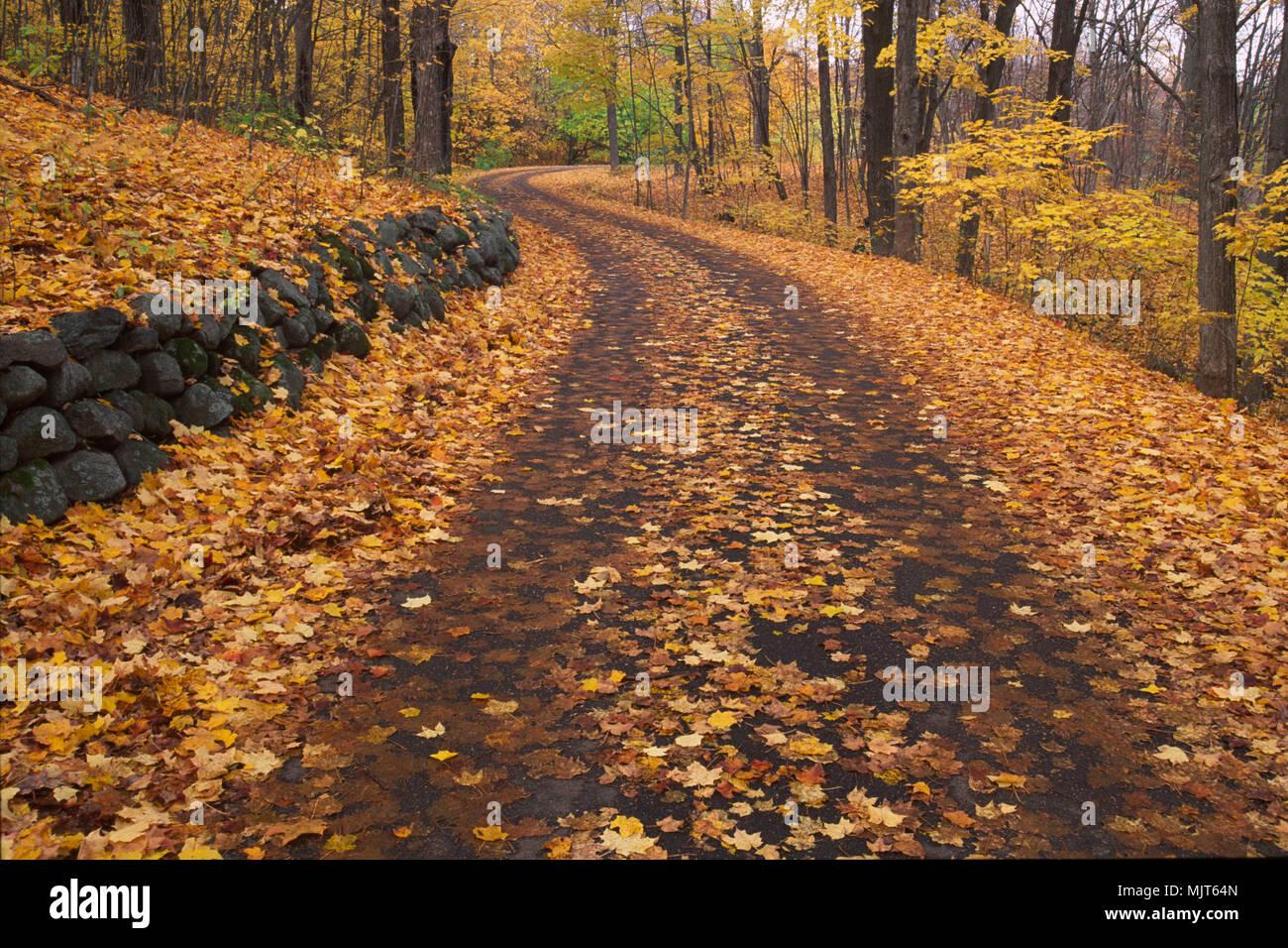 Three Mile Drive, Minnesota Landscape Arboretum, Minnesota - Stock Image