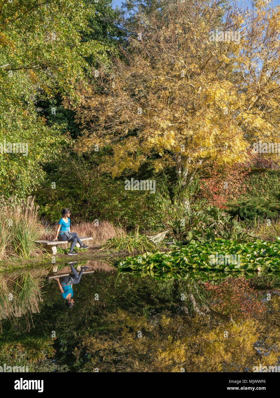 Young asian woman sitting on wooden bench at edge of pond on sunny day surrounded by fall leaves with reflection in water. - Stock Image