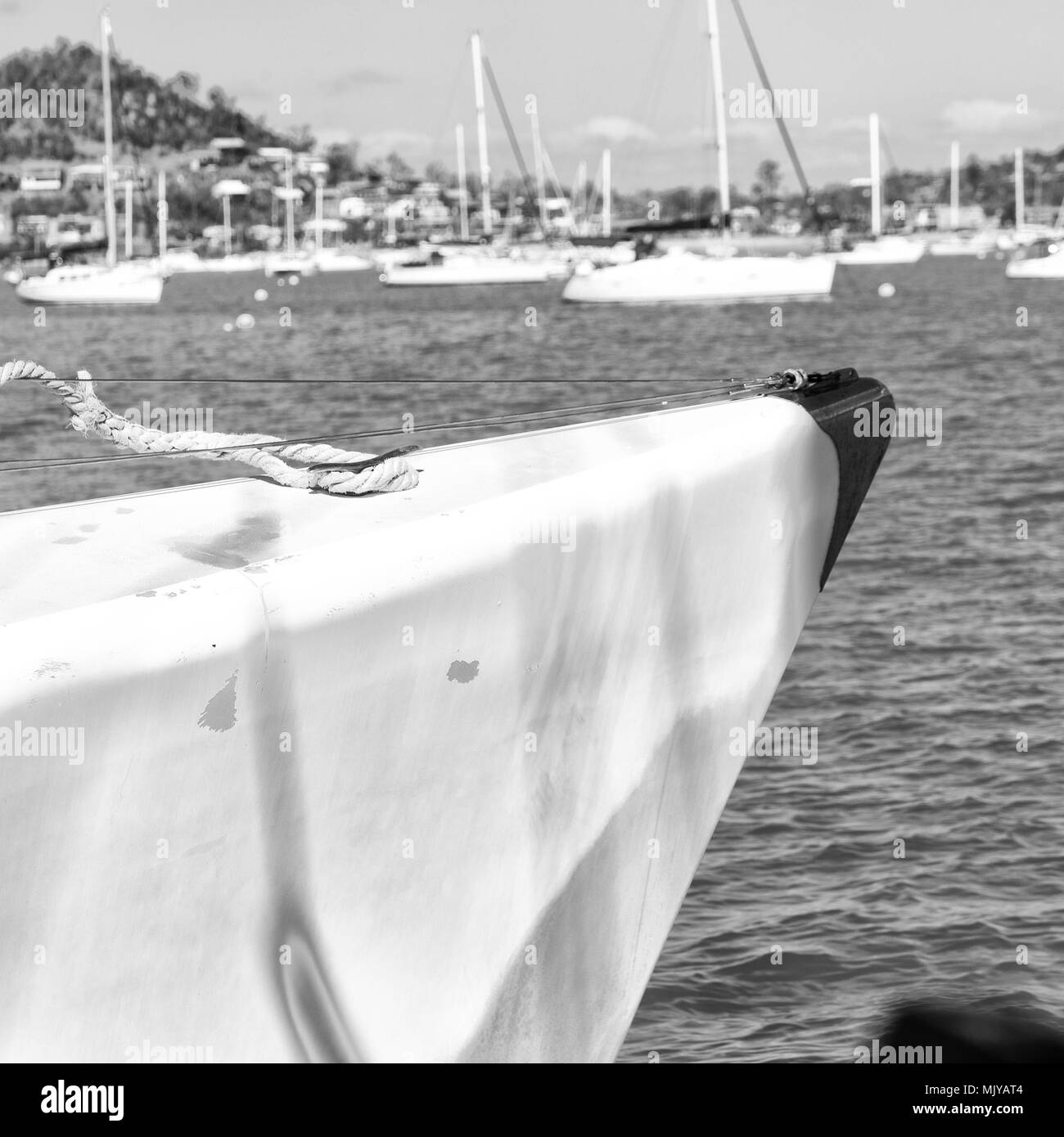 in  australia the concept of sailing with catamaran prow in the ocean and harbor Stock Photo