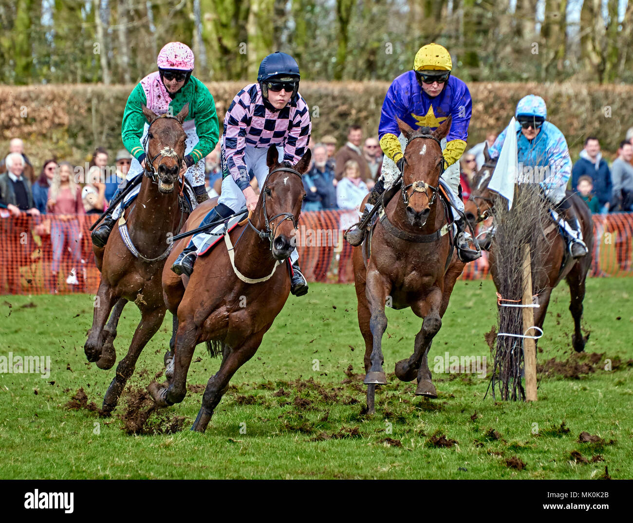Four amateur jockeys riding bay hunters, galloping over soft ground whilst competing in a point-to-point event Stock Photo