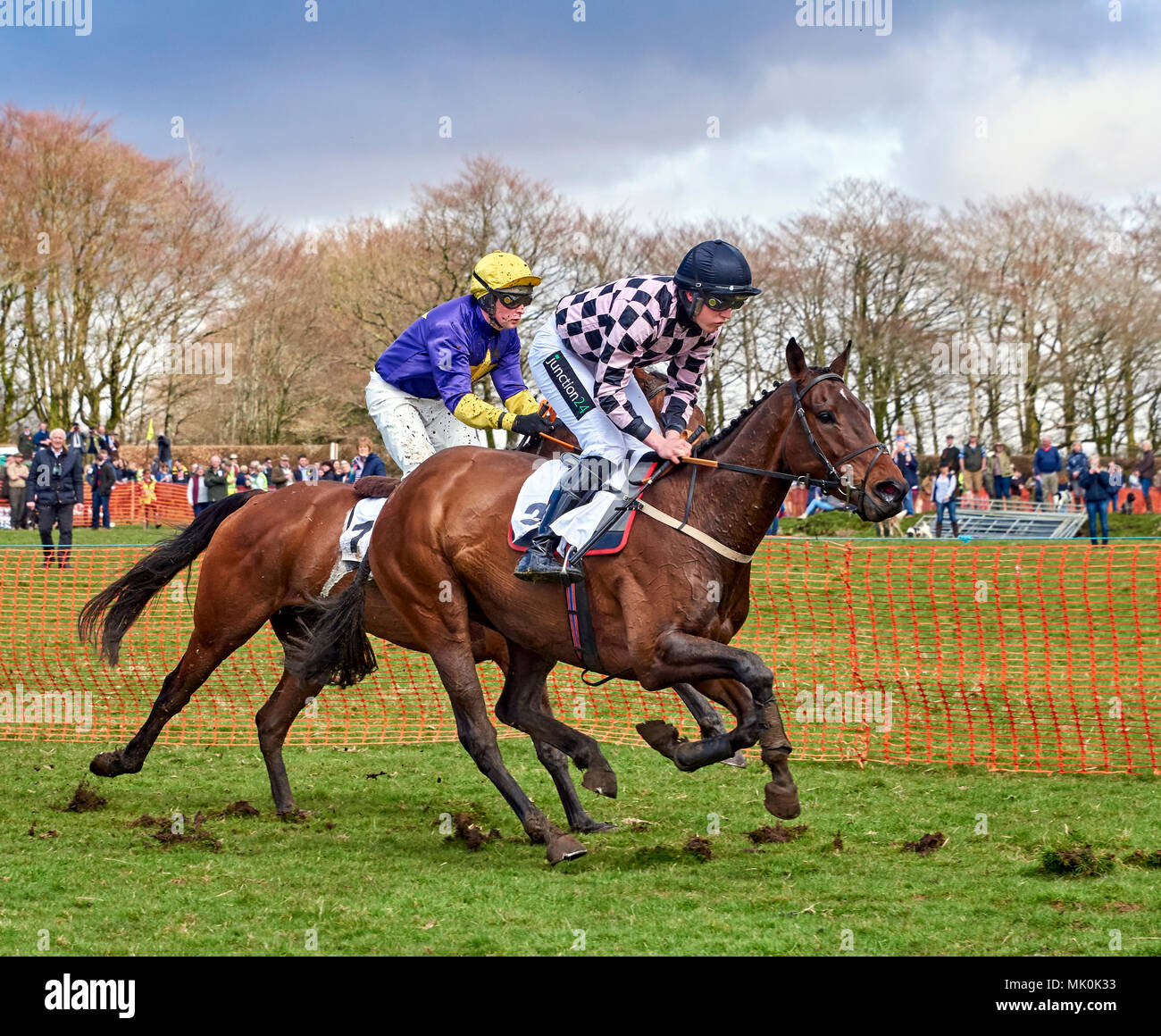 Two amateur jockeys riding bay and chestnut hunters, galloping over soft ground whilst competing in a point-to-point event Stock Photo