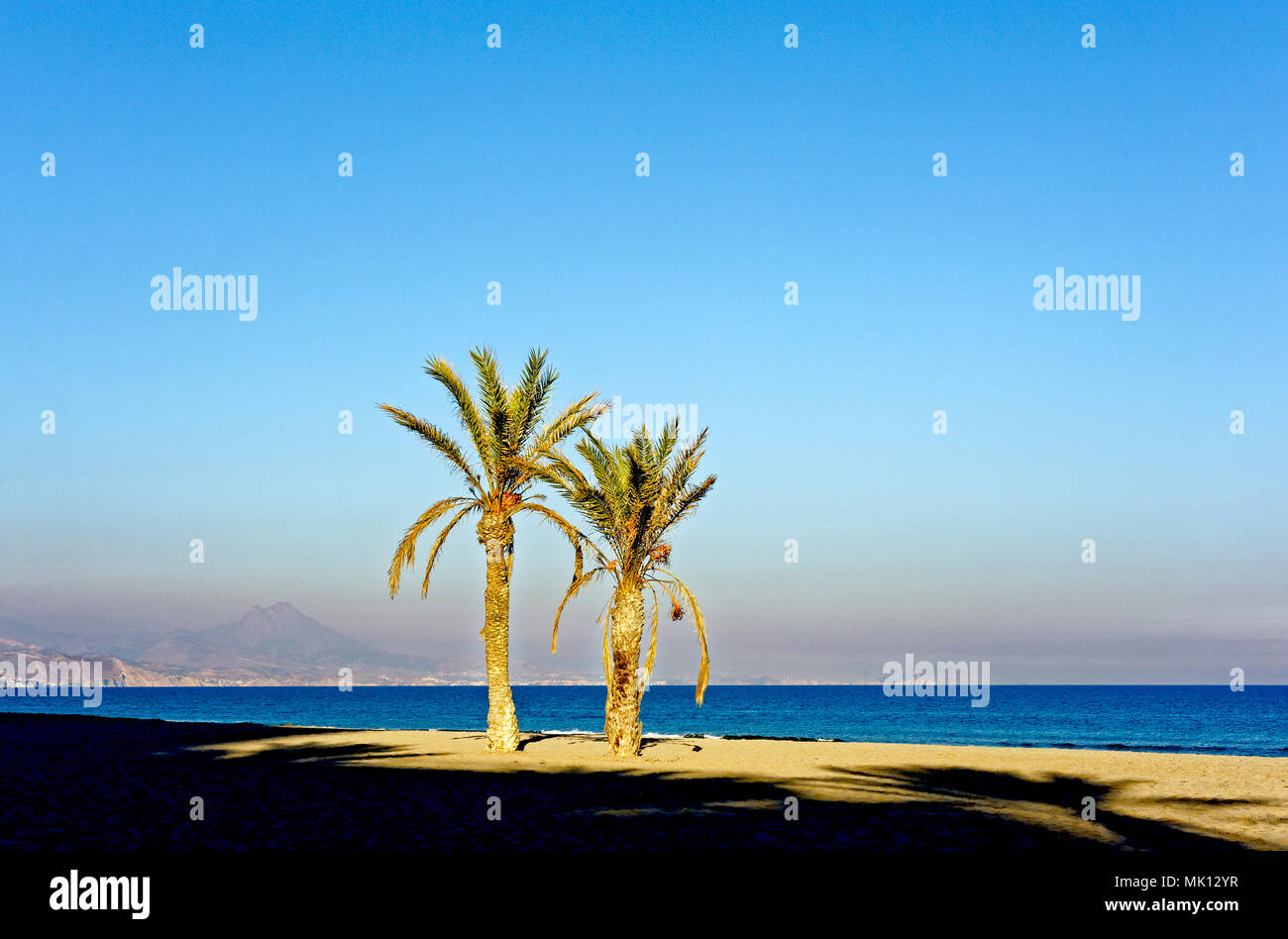 palm trees on the beach - Stock Image