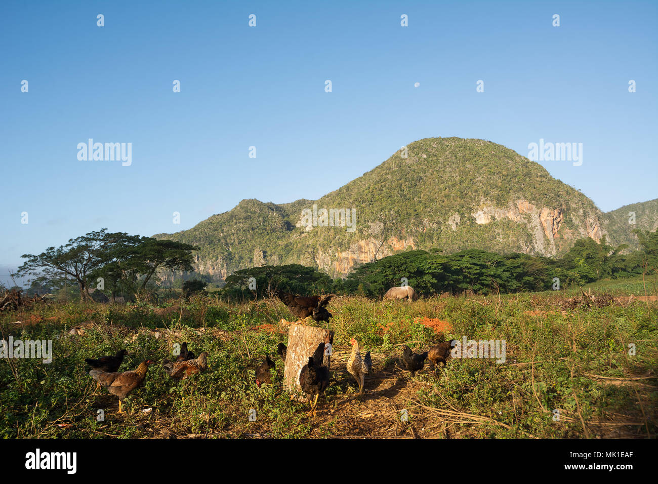 Panorama of the Vinales Valley with the Mogotes Stock Photo