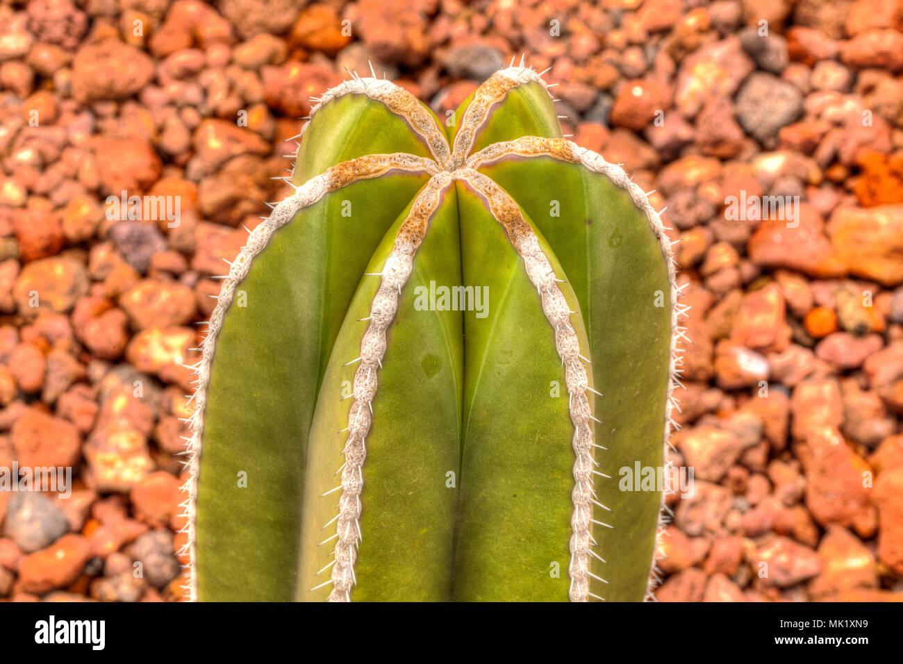 Parque bicentenario stock photos parque bicentenario for Cactus santiago