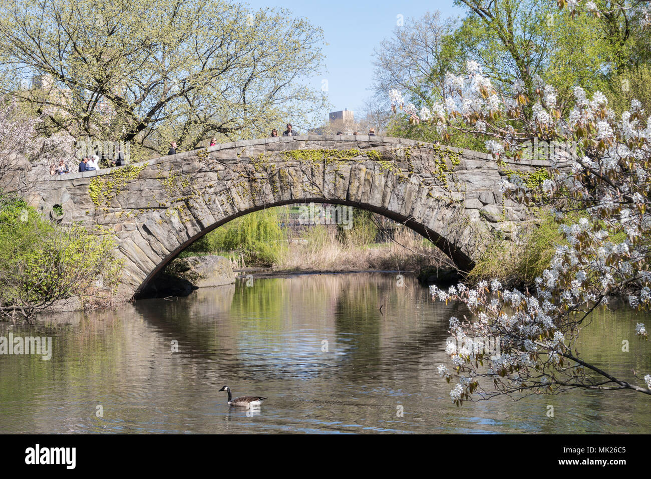 Gapstow Bridge in Central Park, NYC, USA - Stock Image