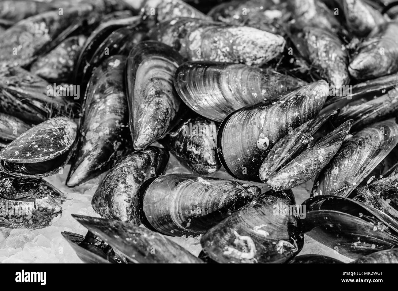 Fresh mussels in a seafood stand in the market - Stock Image