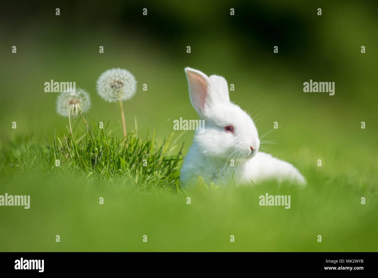Little white rabbit on green grass in summer day - Stock Image