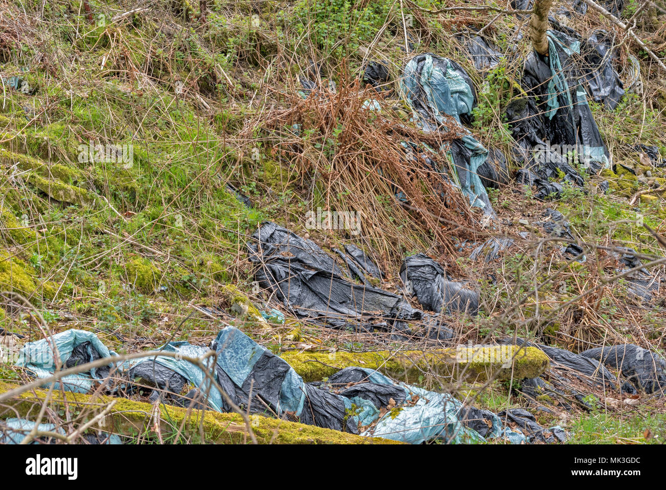 DISCARDED PLASTIC WRAPPERS FROM FARM BALES OF HAY OR SILEAGE LYING IN A DITCH - Stock Image