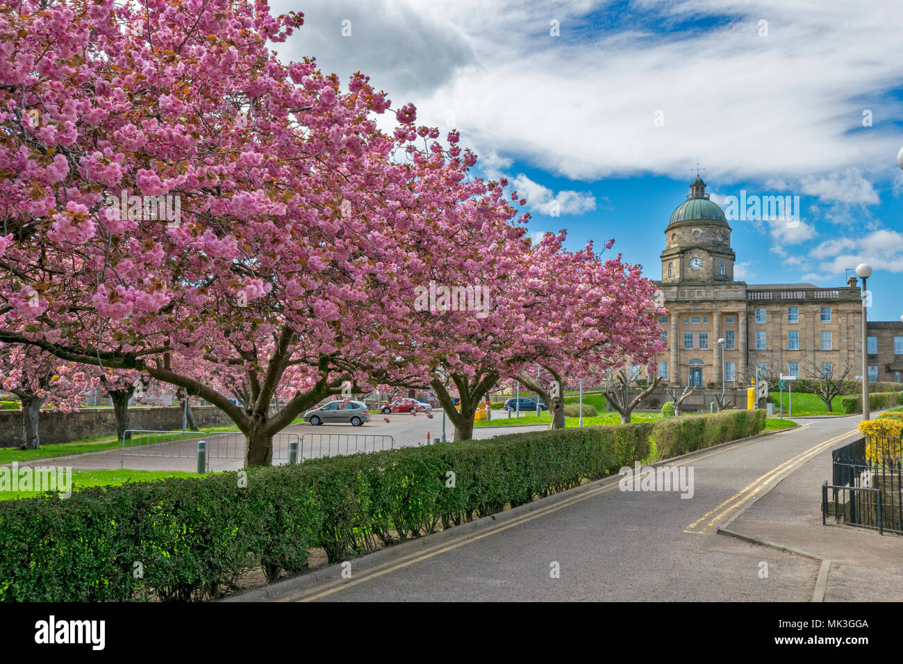 DR GRAYS HOSPITAL ELGIN MORAY SCOTLAND IN SPRING AVENUE OF PINK CHERRY TREE BLOSSOM - Stock Image
