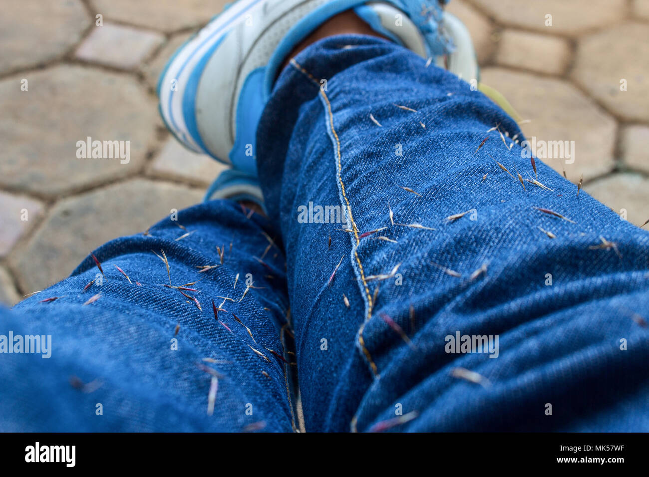 The Weed Seed Stuck on Blue Jean. Close Up of Weed Seed Stuck on Blue Jean. Stock Photo
