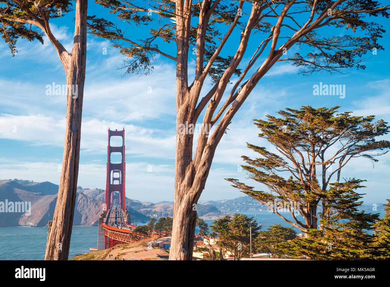 Famous Golden Gate Bridge framed by old cypress trees at Presidio Park on a beautiful sunny day with blue sky and clouds, San Francisco, California - Stock Image