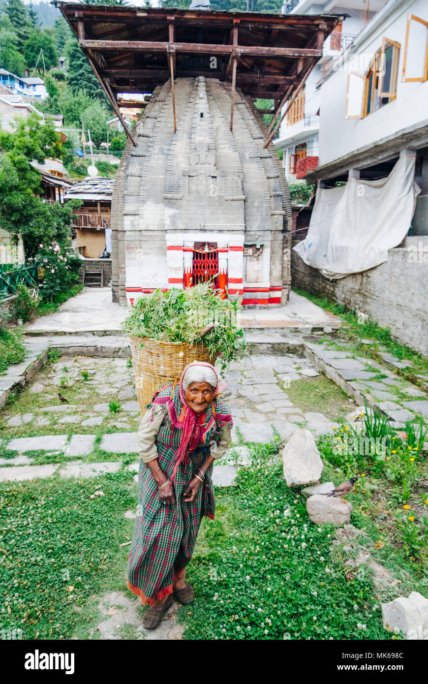 Nagar, Himachal Pradesh, India : 11th-century Vishnu Mandir temple and senior woman carrying a basket full of weed in the historical town of Naggar in - Stock Image