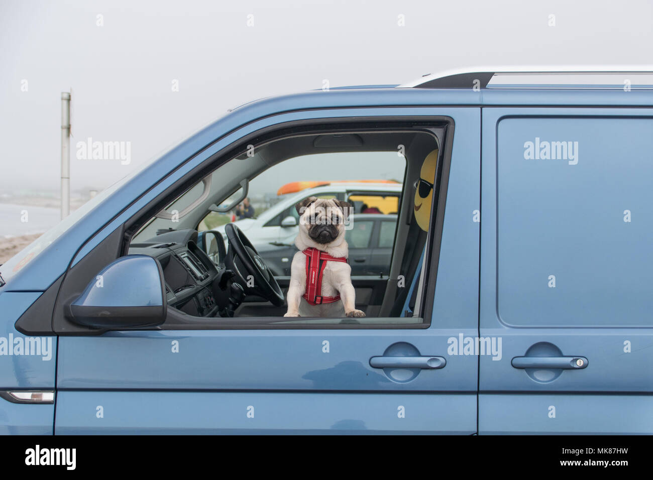 Pug dog looking out of van window looking glum, with a smiley face cushion behind him. - Stock Image