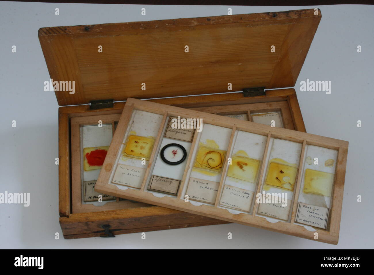 Microscope Slides in wooden tray and Box - Stock Image