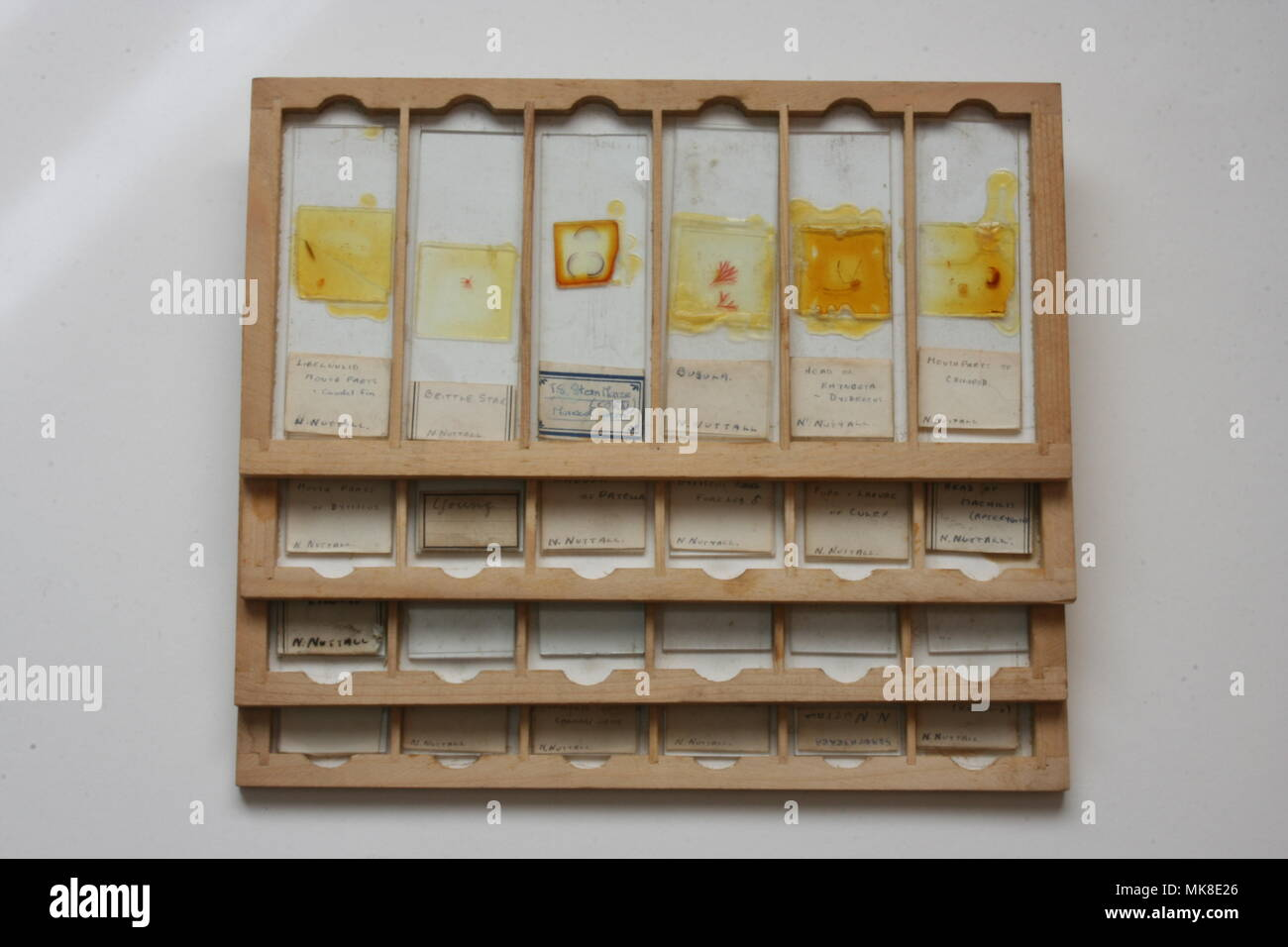 Microscope Slides in wooden tray - Stock Image
