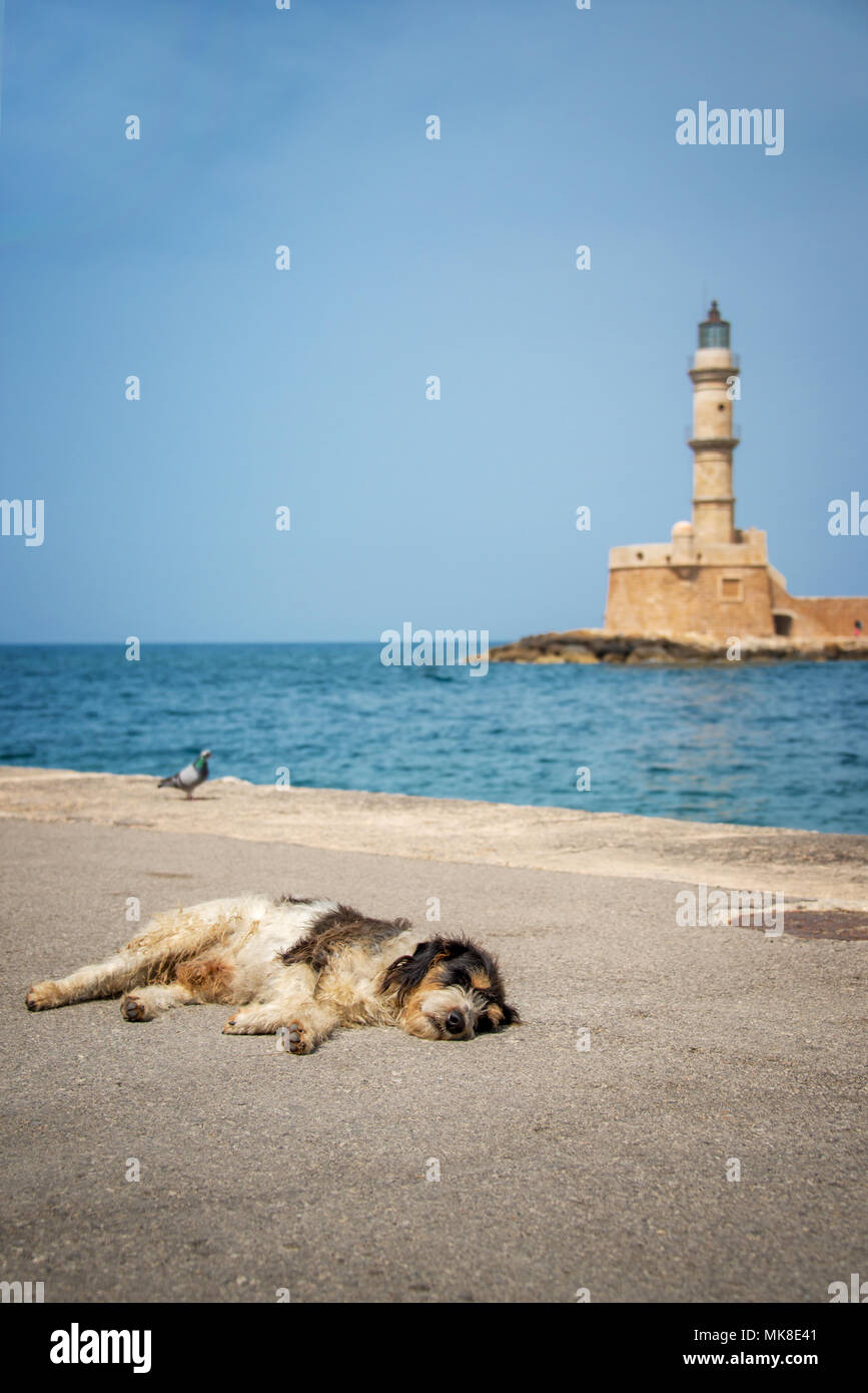 Dog asleep in the sun in the harbor of Chania, the lighthouse in the background, Crete, Greece - Stock Image