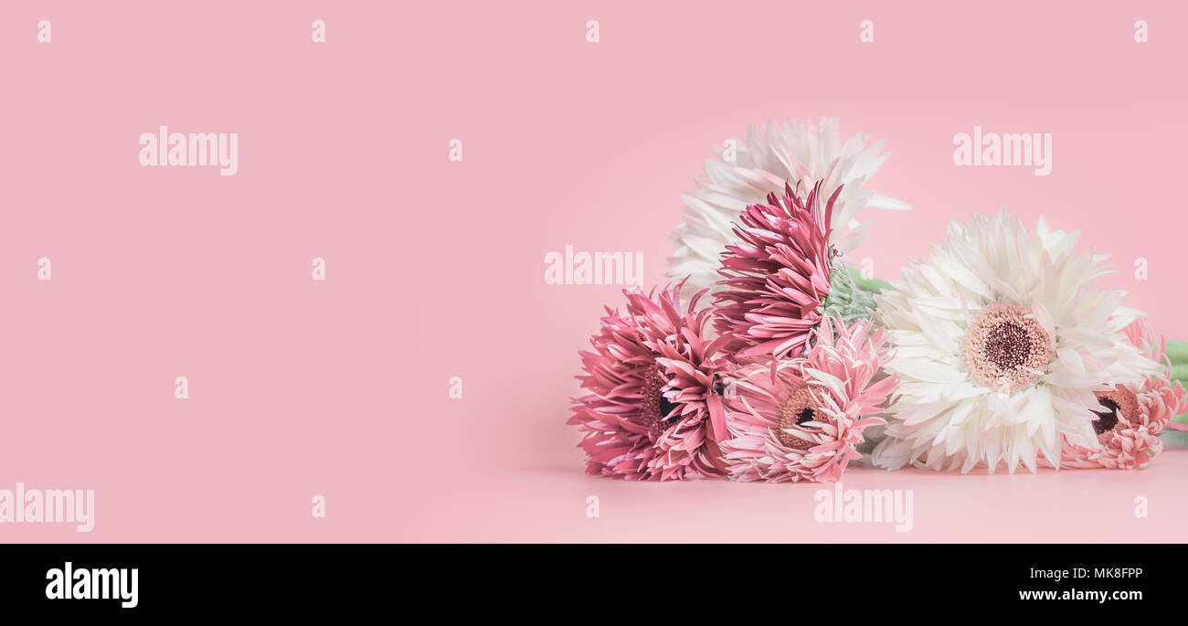 Pastel Pink Floral Banner Or Template Background With Aster Gerbera