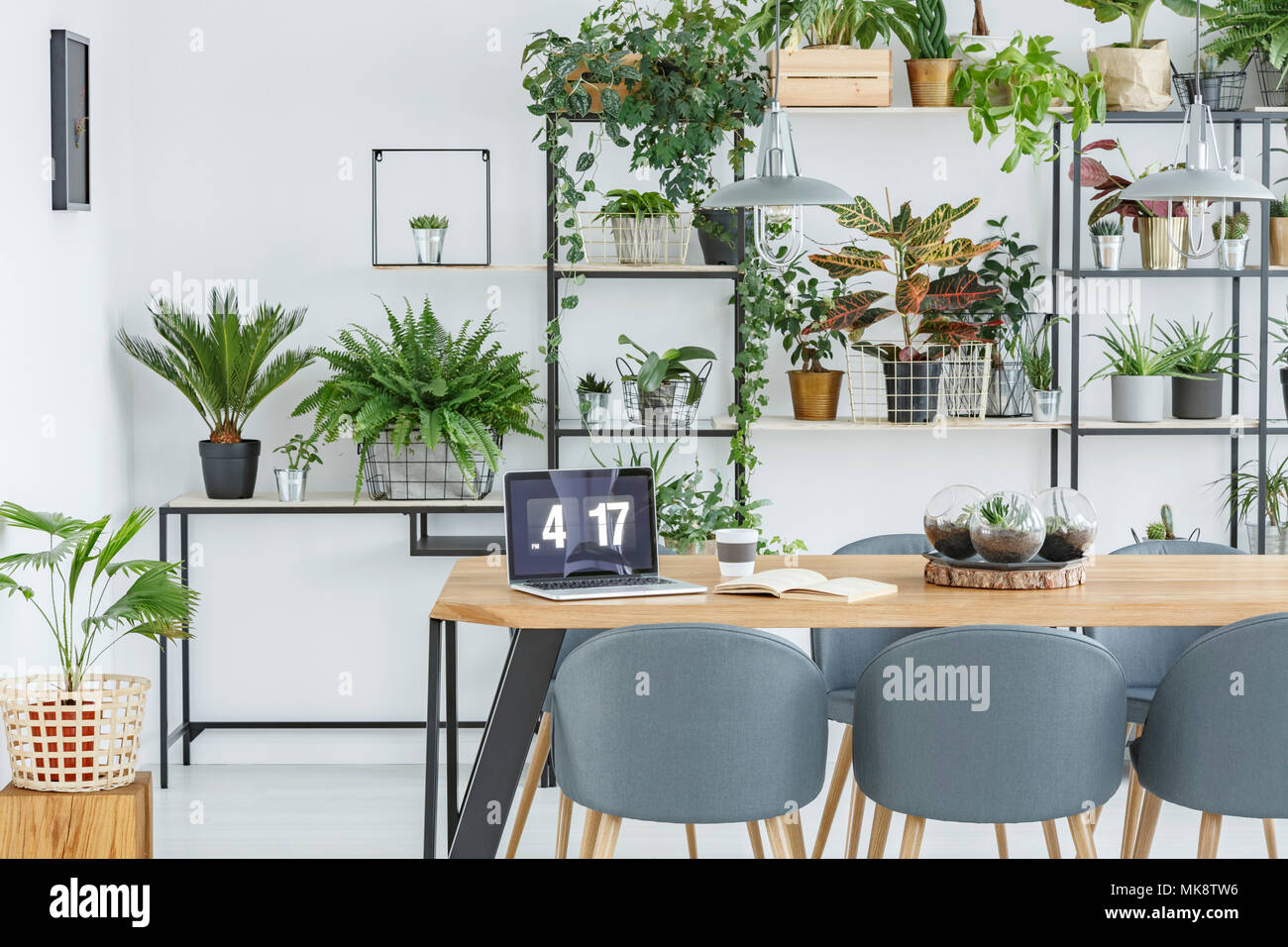 Grey chairs at wooden table with laptop in floral dining room interior with workspace - Stock Image