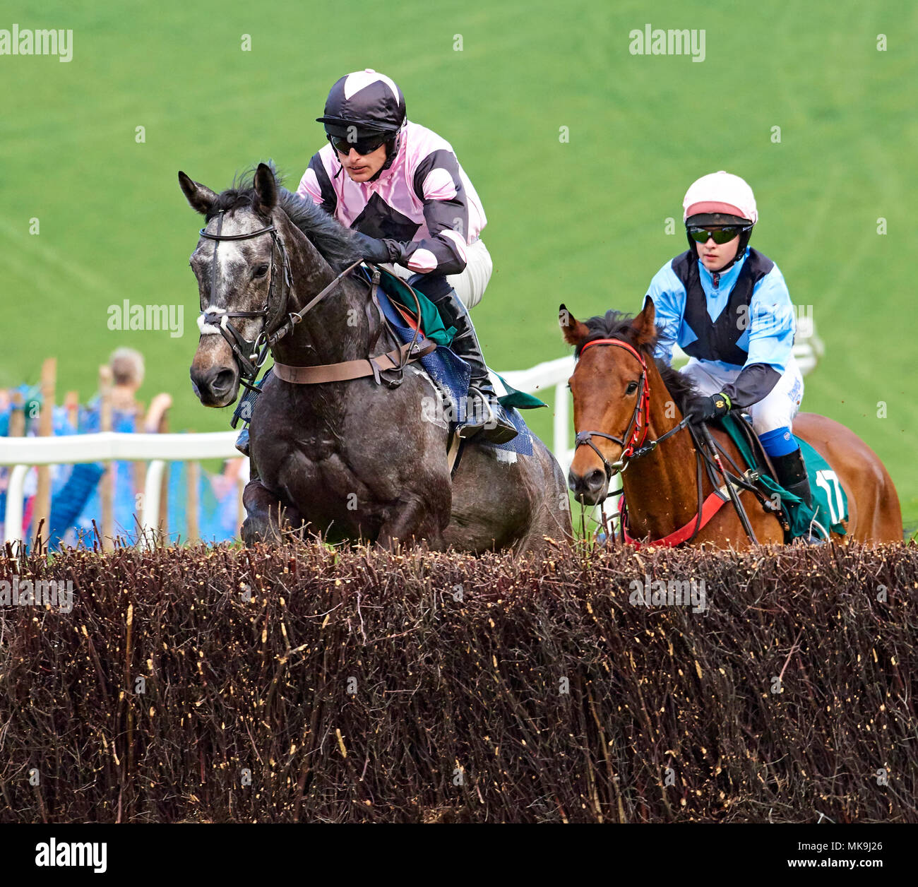Horse and jockey jumping a fence during a point-to-point event - Stock Image