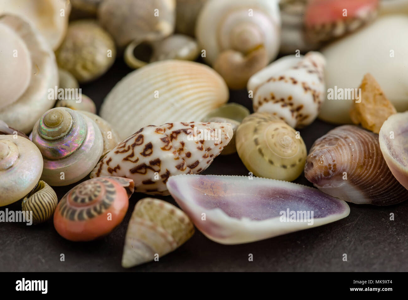 a close up of small sea shells from the sea shore - Stock Image