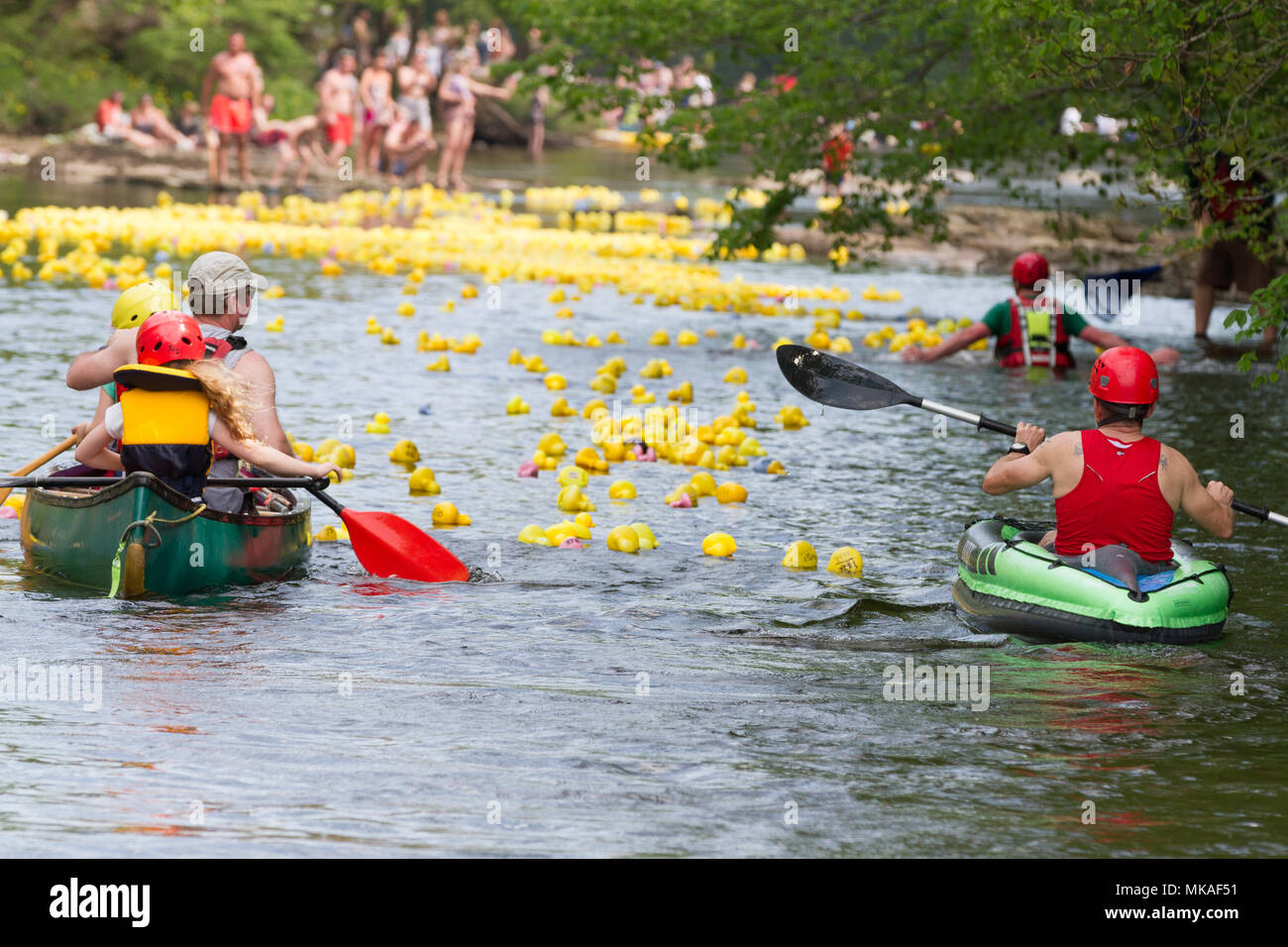 Richmond, North Yorkshire, UK. Monday 7th May, 2018. Organised by Richmond Duck Club, the Grand Duck Race takes place annually on May Day bank holiday and sees 2500 plastic ducks tipped into the River Swale from the Green Bridge from where they float downstream, over the waterfalls to the finishing line at the Batts near the Station Bridge. Credit: Andrew Nicholson/Alamy Live News Stock Photo