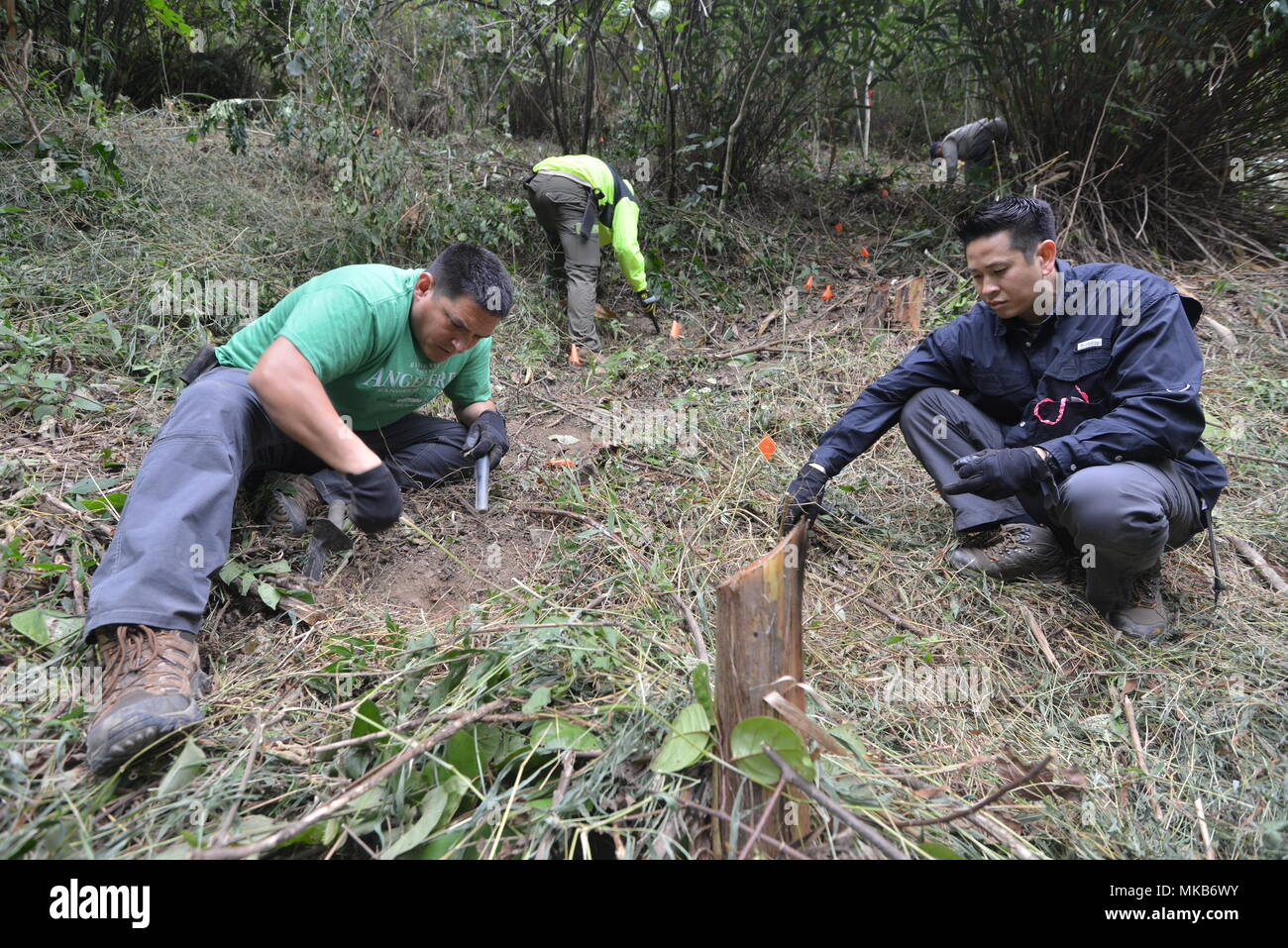 Medics of the forest: which representatives of the animal world clean the nature 74