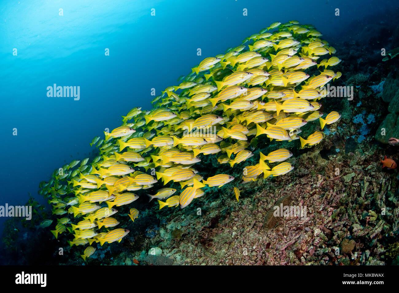 Tanzanian Mafia Island - Stock Image