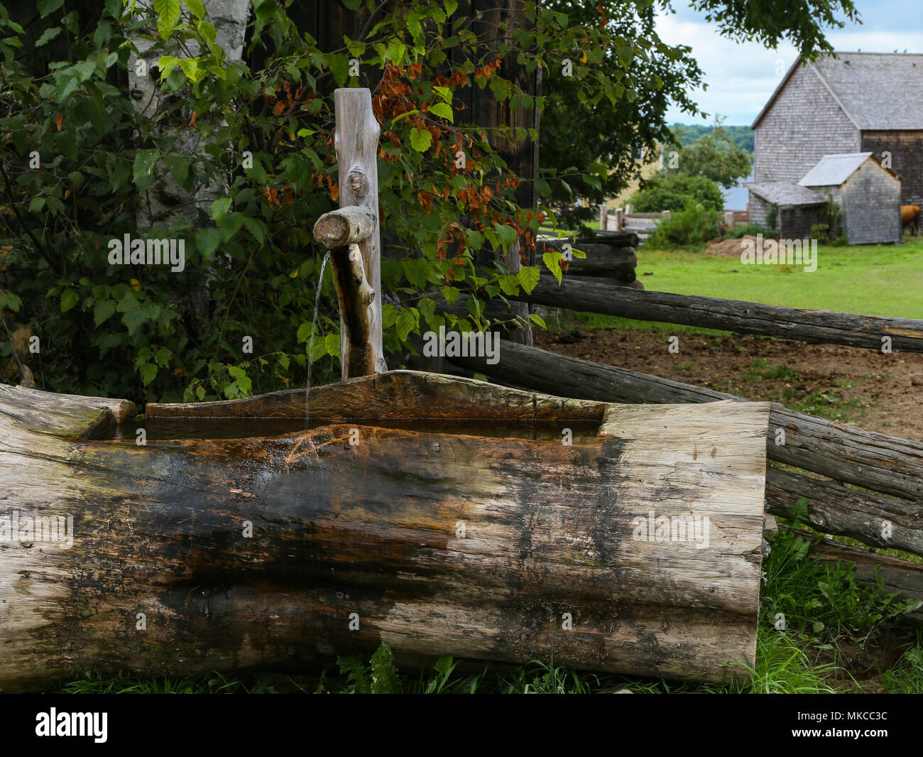 Water trough carved in a tree log with tricking stream of water coming from a wooden spigot at Kings Landing Historic Settlement, New Brunswick, Canad. - Stock Image