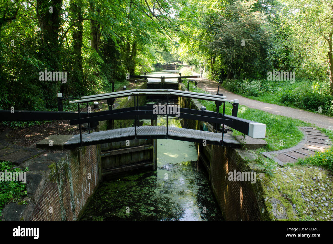 The Basingstoke Canal climbs through a set of locks in woodland between Woking and Deepcut in Surrey. - Stock Image