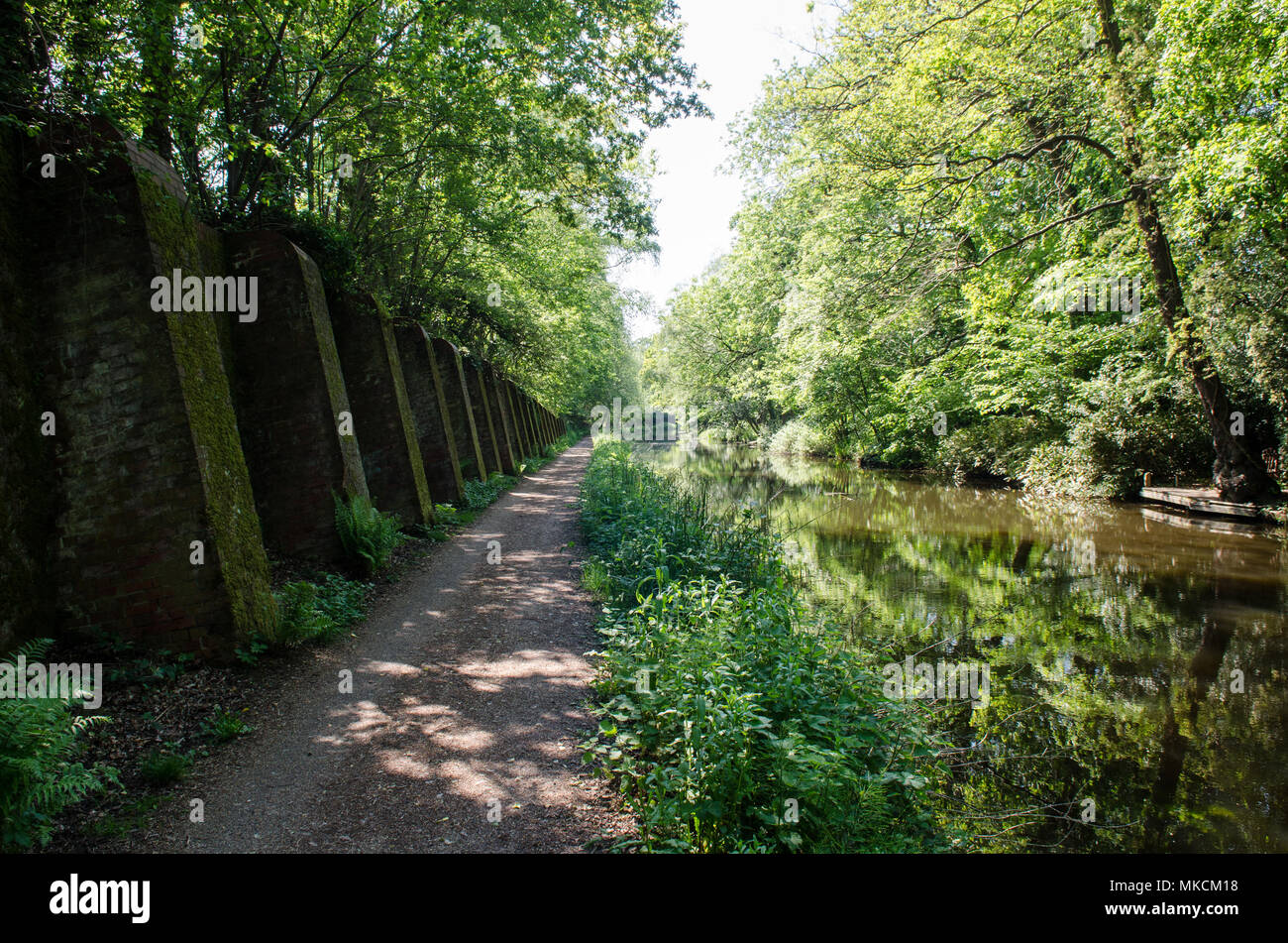 Dappled sunlight shines through woodland onto the Basingstoke Canal at Deepcut in Surrey. - Stock Image