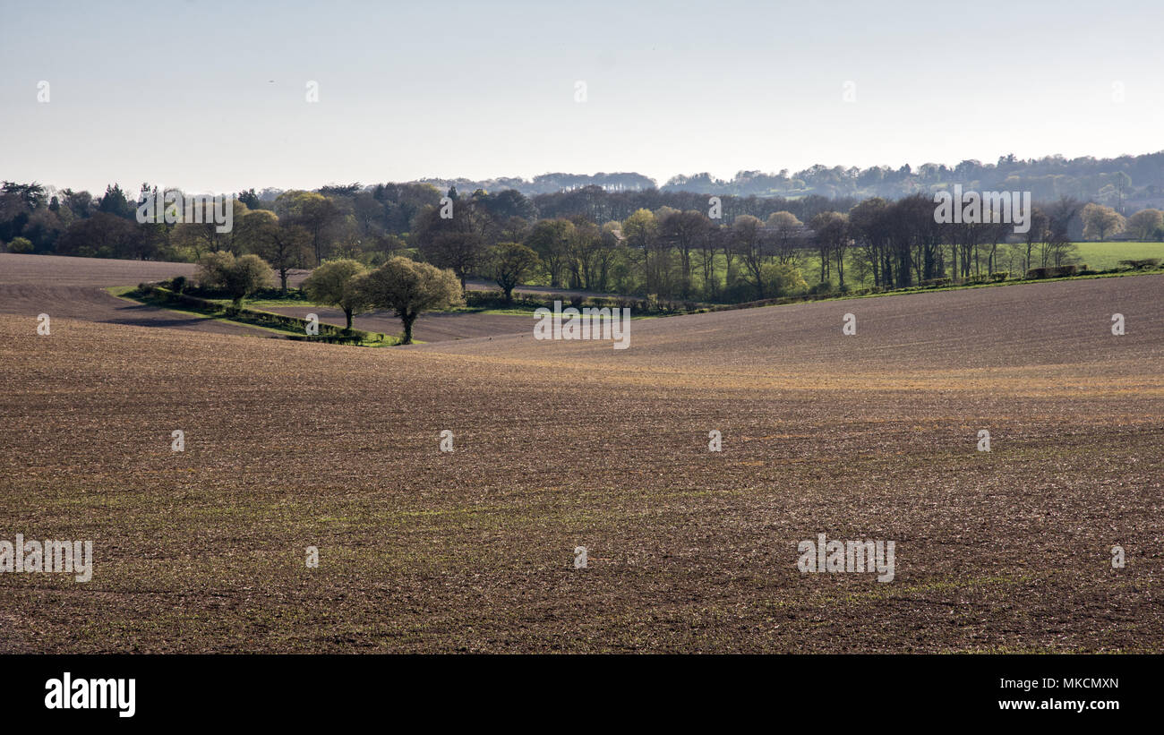 Spring sun shines on ploughed fields in the Hale near Wendover in England's Chiltern Hills. - Stock Image